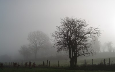 Mist_and_trees